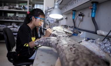 Cercetatorii au identificat cel mai batran animal din lume. Cum arata vietuitoarea de 558 de milioane de ani
