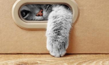 6 obiceiuri bizare ale pisicilor explicate. De ce se comporta asa felina ta