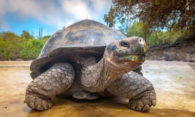 Top 5 cele mai longevive animale de pe Terra. Ce specie e aproape nemuritoare